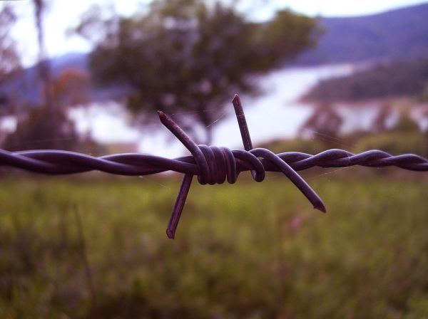 nature, barb wire