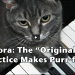 Nora the Cat Genius, playing the piano