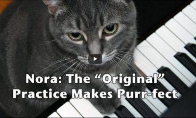 Nora the cat